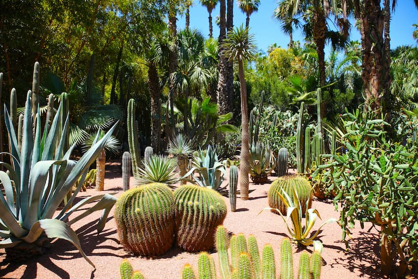 The Majorelle garden, an ode to tranquility